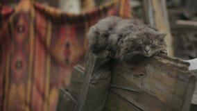 Il gatto senza tetto solo sta facendo un sonnellino sul recinto di legno, sul tappeto colorato e sui rifiuti sui precedenti Coda  video d archivio