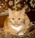 Il gatto si è accovacciato su Boulder Fotografia Stock Libera da Diritti