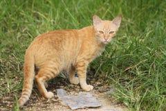 Il gatto si nasconde in erba Fotografia Stock Libera da Diritti
