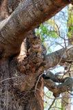 Il gatto si rilassa sul ramo di albero immagini stock libere da diritti