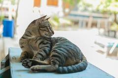 Il gatto si rilassa sulla tavola di legno Fotografia Stock