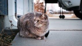Il gatto si siede con freddo Fotografia Stock