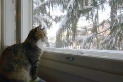 Il gatto si siede dalla finestra nell'inverno fotografia stock