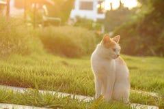 Il gatto si siede a piedi il percorso con luce solare Fotografia Stock