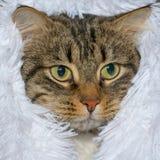 Il gatto si siede sotto un panno Fotografia Stock