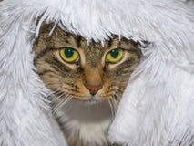 Il gatto si siede sotto un panno Immagine Stock