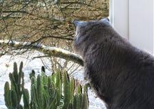 Il gatto si siede su una finestra Gatto vicino al vaso da fiori pianta verde nella finestra fotografia stock