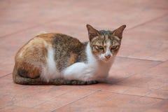Il gatto si siede sul pavimento Immagini Stock Libere da Diritti