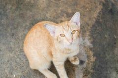Il gatto si siede sul pavimento di calcestruzzo Fotografie Stock