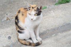 Il gatto si siede sulla terra Fotografia Stock