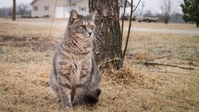 Il gatto si siede vicino all'albero Fotografia Stock Libera da Diritti
