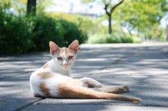 Il gatto si trova su pavimentazione Immagini Stock Libere da Diritti