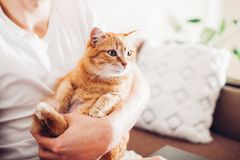 Il gatto si trova su un cuscino a casa vicino al suo padrone fotografie stock libere da diritti
