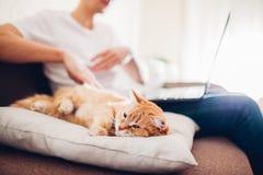 Il gatto si trova su un cuscino a casa vicino al suo padrone con un computer portatile fotografie stock libere da diritti