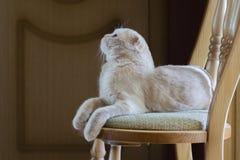 Il gatto si trova su una sedia e cerca fotografia stock libera da diritti