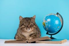 Il gatto si trova sul libro dell'esperto di libri il gatto nella biblioteca fotografia stock libera da diritti