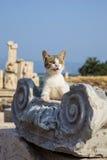 Il gatto si trova sulle rovine Fotografia Stock
