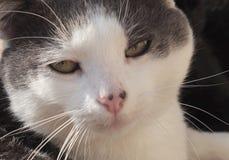 Il gatto sleale fotografia stock libera da diritti
