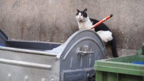 Il gatto smarrito del senzatetto va lungo il contenitore sporco dell'immondizia - primo piano stock footage