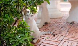 Il gatto smarrito gioca a nascondino Fotografia Stock