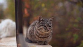 Il gatto smarrito grigio adorabile che si siede vicino recinta il parco a Odessa archivi video