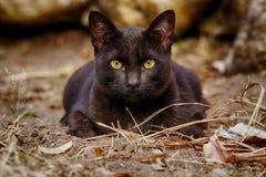 Il gatto smarrito nero che vive sulla terra Fotografie Stock Libere da Diritti