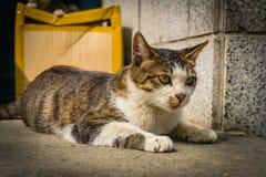 Il gatto smarrito si accovaccia vicino su in sole Immagini Stock