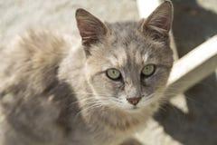 Il gatto solo con gli occhi tristi Fotografie Stock