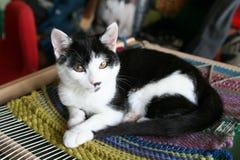 Il gatto sopra gobelen Immagini Stock