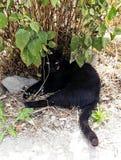 Il gatto sotto le foglie immagine stock