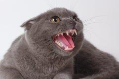 Il gatto spaventato Immagini Stock Libere da Diritti