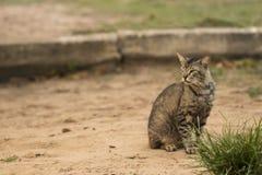 Il gatto spaventoso che fissa alla macchina fotografica prepeared per attaccare Obiettivo macro Fotografia Stock Libera da Diritti