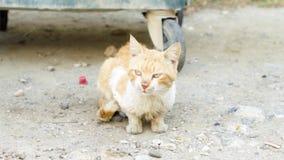Il gatto sporco senza tetto si siede all'aperto Gattino affamato triste dello zenzero vicino al bidone della spazzatura sulla via stock footage