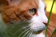 Il gatto sta cercando nell'erba fotografia stock