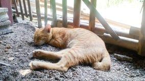 Il gatto sta dormendo accanto ad un recinto di bambù fotografie stock