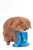 Il gatto sta giocando Fotografia Stock