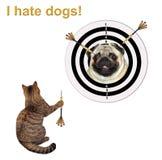 Il gatto sta giocando i dardi 3 fotografia stock libera da diritti