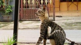 Il gatto sta graffiando il suo corpo per itching Fotografie Stock