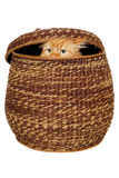 Il gatto sta nascondendosi in un canestro. Immagini Stock Libere da Diritti