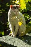 Il gatto sta pensando alla pianta immagine stock libera da diritti