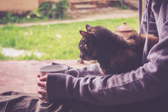 Il gatto sta riposando immagine stock libera da diritti