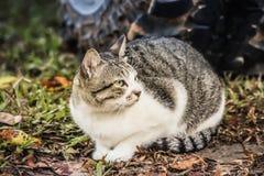 Il gatto sta riposando Fotografia Stock Libera da Diritti