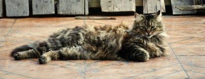 Il gatto sta riposando sul pavimento Immagine Stock Libera da Diritti