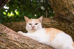 Il gatto stava trovando sull'albero Fotografie Stock Libere da Diritti