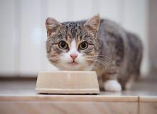 Il gatto a strisce grigio mangia da una ciotola Fotografia Stock
