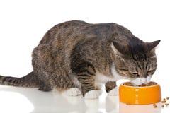 Il gatto a strisce grigio mangia l'alimento asciutto Fotografie Stock