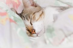 Il gatto a strisce sta dormendo in coperta alla mezzanotte fotografia stock libera da diritti