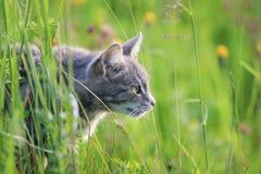 Il gatto a strisce sveglio mi cerca fra l'erba verde fertile su un'estate Fotografia Stock