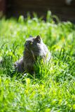 Il gatto su un'erba Fotografia Stock Libera da Diritti