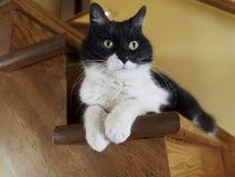 Il gatto sulle scale Fotografia Stock
